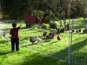 chicks9