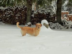 snow 2-14b