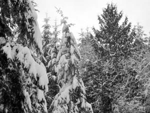 snow 2-14d