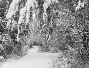 snow 2-14f