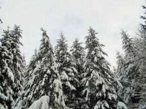 snow 2-14g