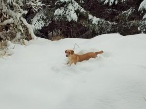 snow 2-14h