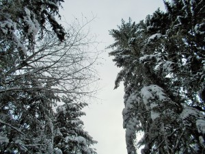 snow 2-14i