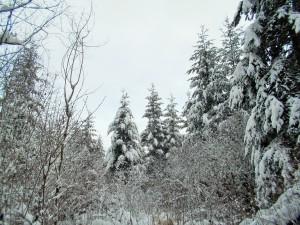 snow 2-14j