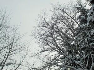 snow 2-14k