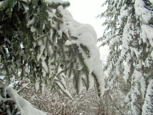 snow 2-14m