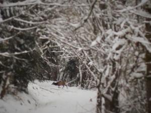 snow 2-14n