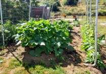 sonia garden 2020 old pigpen