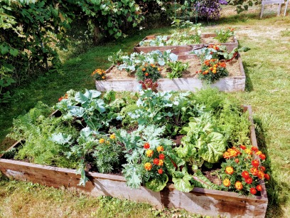 sonia garden 8.8.2020